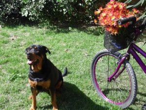 hond zit in het gras met mountainbike ernaast