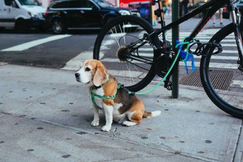 hond aangelijnd aan fiets op straat