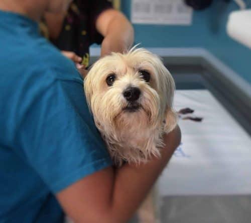 hond in de armen van een dierenarts