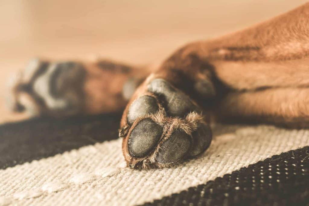 poot van hond op een mat