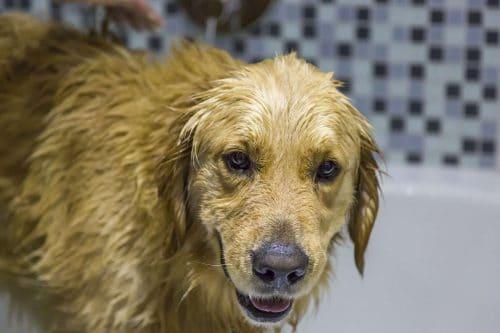 gewassen hond in badkamer