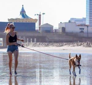 vrouw laat hond uit op het strand