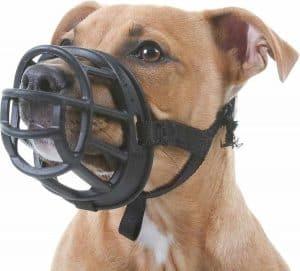 hond die een muilkorf draagt