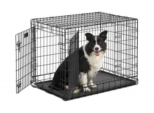 border collie in een hondenbench