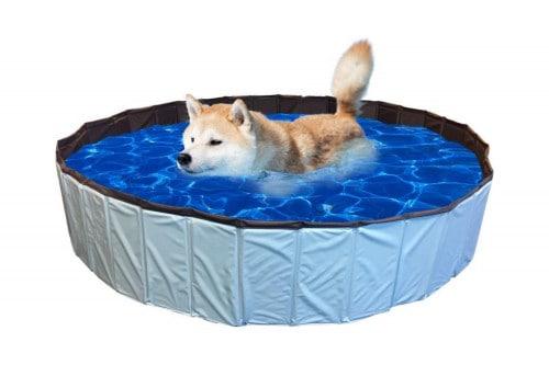 hondenzwembad