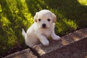 puppy leunt op een steen