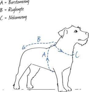 schematische tekening voor het afnemen van de afmetingen van je hond voor een hondentuig