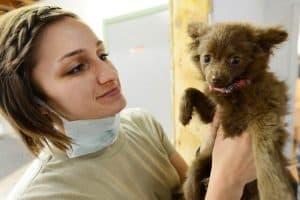 vrouw houdt hond vast