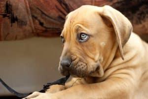 hond kijkt zielig en kijkt naar boven toe