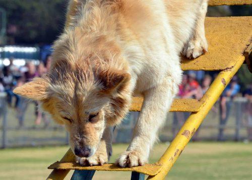hond klimt een trap naar beneden