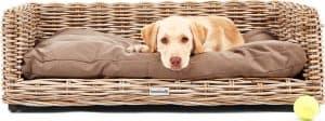 hond ligt in een hondenbank