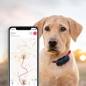 hond met een gps tracker om naast een iphone met google maps die laat zien waar de hond is