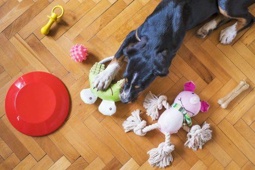 hond ligt met speelgoed op de vloer