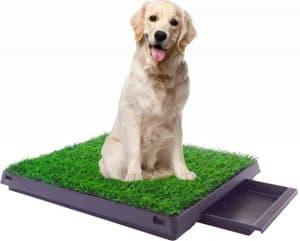 hond zit op een hondentoilet
