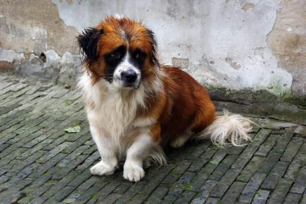 hond zit op straat en kijkt zielig