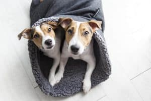 twee honden in een slaapzak