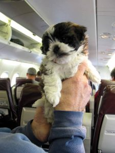 puppy in een vliegtuig