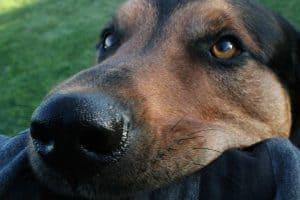 close up van een hond die zielig kijkt