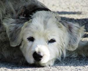 hond kijkt zielig liggend op straat