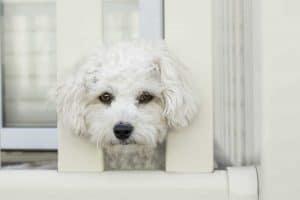 hond kijkt zielig met zijn kop tussen twee balken