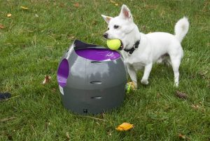 hond legt tennisbal in automatische ballenwerper