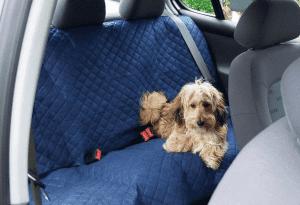 hond ligt op een deken voor in de auto