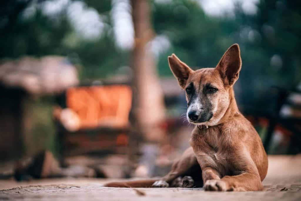 hond ligt op straat