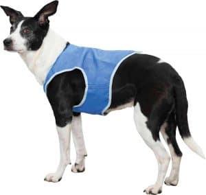 hond met een koelvest om