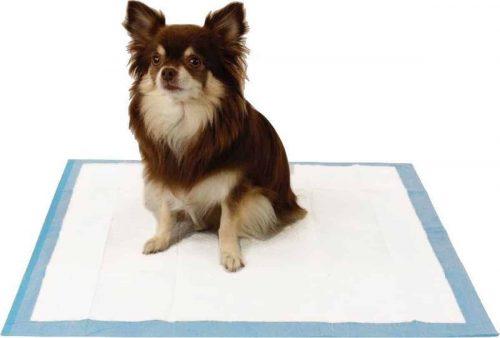hond zit op een puppy pad