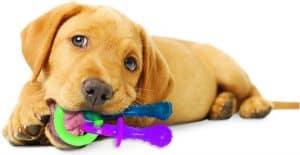 puppy kauwt op puppyspeelgoed