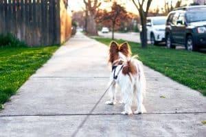 hond aan de lijn op de stoep