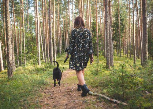 hond loopt met baasje in het bos