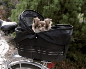 hond zit in een fietsmand