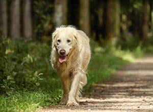 hond loopt door het bos