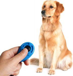hond zit voor een hand die een clicker voor honden vasthoud