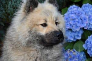 close up van een eurasiër