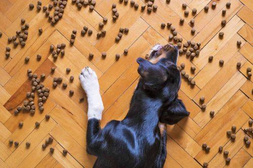 hond ligt op een houtenvloer met brokken om hem heen