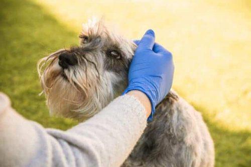 hond wordt geaaid met een rubberen handschoen