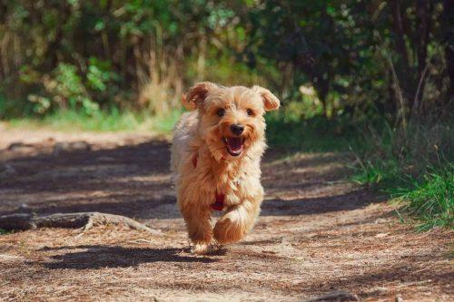 puppy komt aangerend in een bos