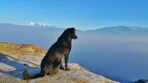 hond zit op een grote steen tussen de bergen