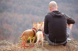 man zit op gesteende met twee aangelijnde honden naast zich