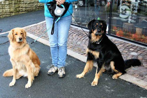 mens staat met twee aangelijnde honden voor een winkel
