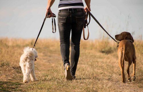 mens wandelt met twee aangelijnde honden